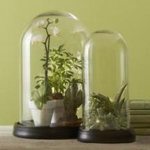ensemble-de-2-cloches-en-verre-avec-base-set-of-2-bell-jars--256px-256px